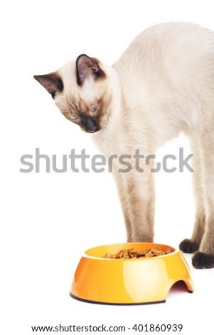 Thai Cat Looking At Food - stock photo