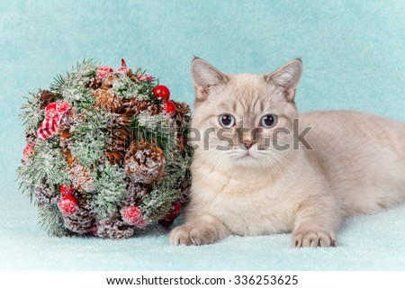 Thai cat lying next to Kissing Bough - stock photo
