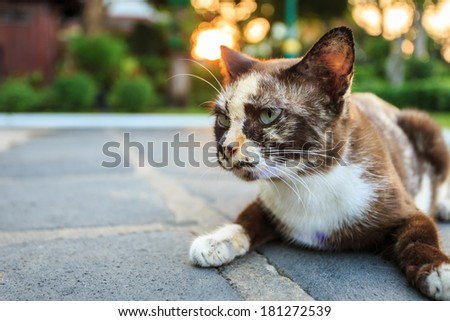 Thai cat on the ground in temple of Thailand - stock photo