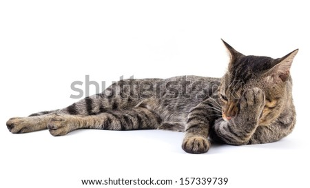 Thai cat scratching its leg with mouth - stock photo