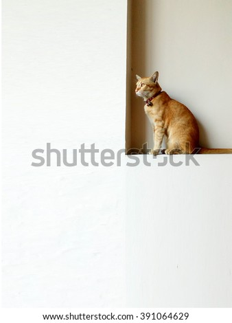 Thai cat sitting on a white wall.copy space - stock photo