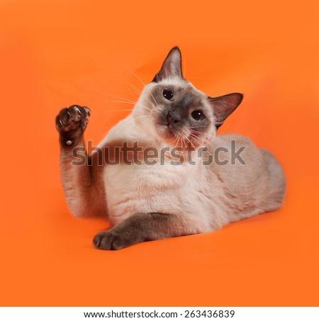 Thai cat with green eyes lying on orange background - stock photo