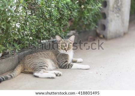 Thai cute cat in thai temple - stock photo