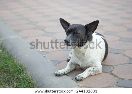 Thai dog waiting for his owner - stock photo