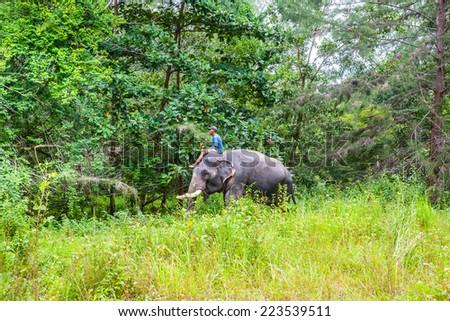 Thai Elephant - stock photo