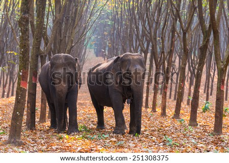 Thai Elephant in a forest at Kanchanaburi province, Thailand - stock photo