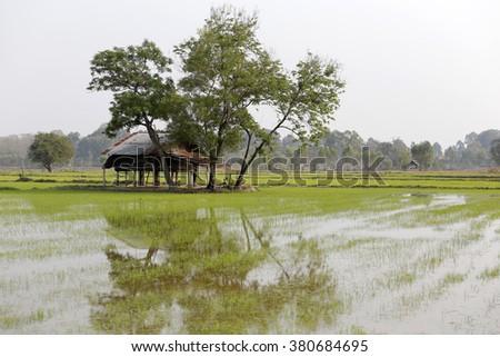 Thai farmer hut in rice field - stock photo