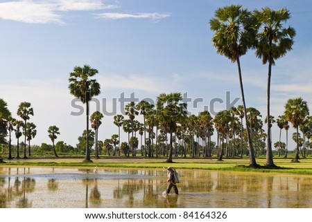 Thai farmer working in the rice field - stock photo