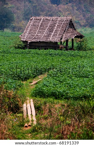 Thai farmers hut in the rice paddies - stock photo