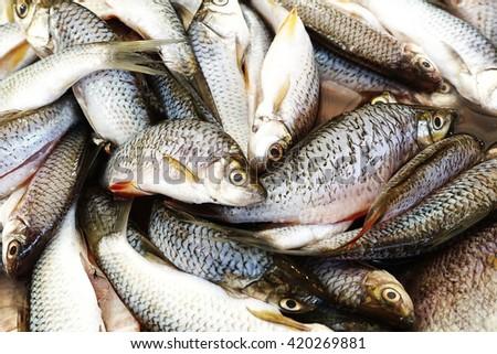 Thai fishes  freshness ingredient raw gourmet market Fresh Fish food - stock photo