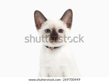 Thai kitten on white background - stock photo