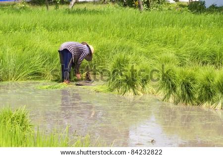 Thai peasant agriculture. - stock photo