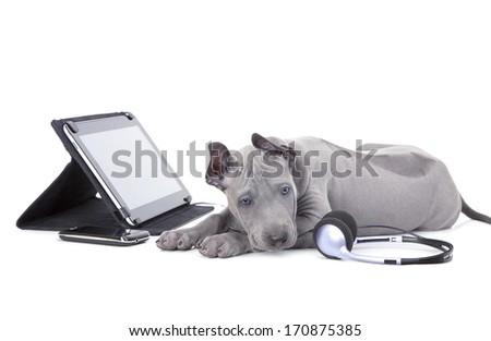 Thai ridgeback puppy lying beside digital tablet computer  - stock photo