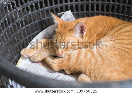 Thai Street Cat with the Yellow Color's sleeping in the basket with the comfy pose - stock photo