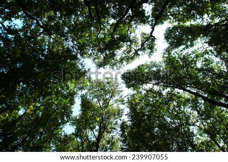 Thailand Forest Park - stock photo