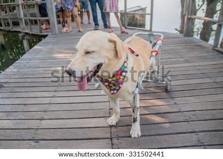 Thailand 2015 Oct 25, people and disability dog on wood bridge at Khun-Kha-bean gulf ,Chantaburi town Thailand. - stock photo