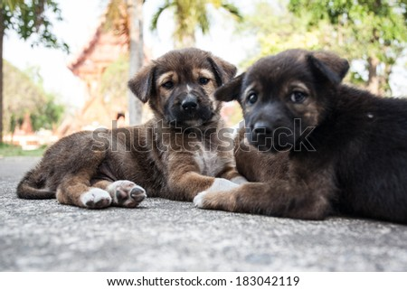 Thailand puppies - stock photo
