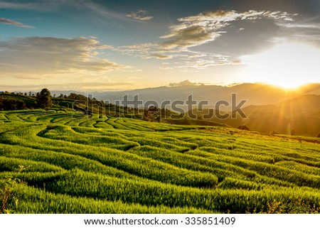 Thailand rice terraces