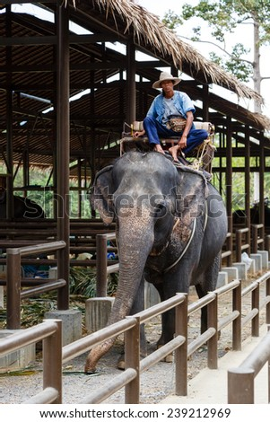 Thailand, Samui -  December 15, 2014: tourist excursion, show of elephants