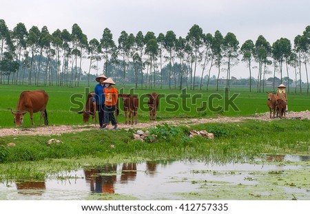 THANH HOA, Vietnam, September 18, 2015 rural women, Thanh Hoa province, livestock cow herd