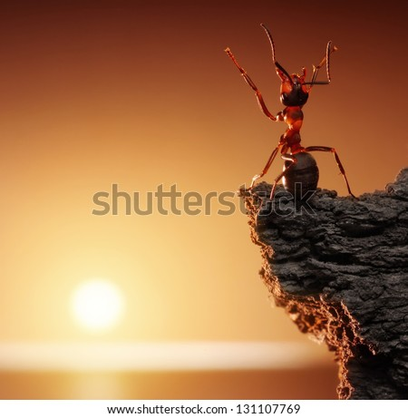 thanksgiving, ant tales - stock photo