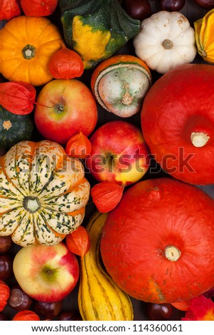 Thanksgiving background - pumpkins and apples for Thanksgiving - stock photo