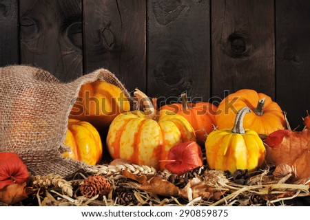 Thanksgiving - different pumpkins in jute bag on straw with copyspace in front of brown background - stock photo