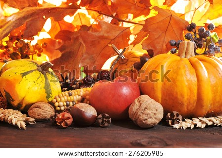Thanksgiving - different pumpkins with nuts, maize, berries and grain in front of highlighted oak foliage - stock photo