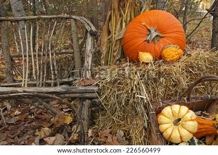 Thanksgiving Display of Pumpkin and Gourds with Twig Chair - stock photo