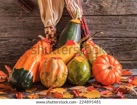 Thanksgiving fall harvest with gourds & pumpkin against rustic old barn wood background  - stock photo