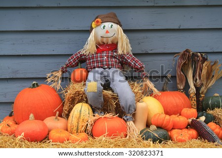 Thanksgiving, harvest and autumn decoration. Scarecrow sitting over bail of hay and guarding the harvested pumpkins, squashes and colorful Indian corns.