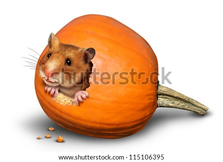 Thanksgiving harvest symbol with a fun pet hamster inside a hole of an eaten pumpkin on a white background as a concept of giving thanks for the abundance of fresh produce and autumn crops. - stock photo