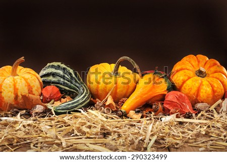 Thanksgiving - many different pumpkins on straw in front of dark background with copyspace
