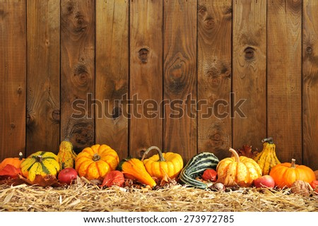 Thanksgiving - many different pumpkins on straw in front of old weathered wooden boards with copyspace - stock photo