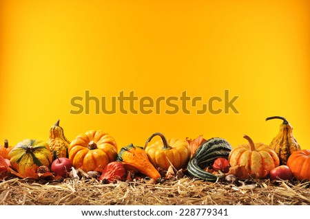 Thanksgiving � many different pumpkins on straw in front of orange background with copyspace