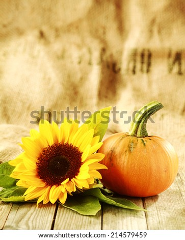 Thanksgiving or autumn background of a bright yellow sunflower and fresh pumpkin or orange squash on rustic wooden boards with a textured brown and beige background with large copyspace - stock photo
