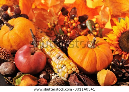 Thanksgiving - pumpkin, apples, nuts, maize and berries in front of highlighted maple foliage - stock photo