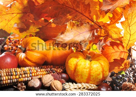Thanksgiving - pumpkin, apples, nuts, maize and berries in front of highlighted oak foliage - stock photo