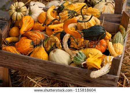 thanksgiving pumpkins on straw with box in natural colors at daylight