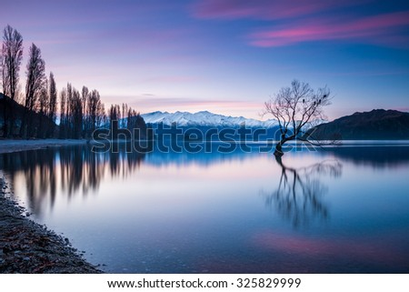 That Wanaka Tree at Sunset - The Most Photographed Tree in New Zealand | Wanaka, NEW ZEALAND - stock photo