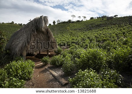 Thatch hut on a tea plantation near the village of Chimate in the Yungas region of Bolivia.