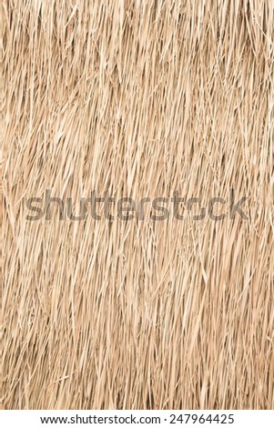 Hay Roof & Tropical Thatch Roof In Thailand  Photo