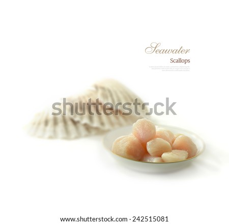 Thawing frozen seawater scallops with scallop shells in the background against white. Copy space. - stock photo