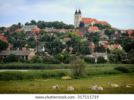 The Abbey in Tihany and the grey cattles - stock photo
