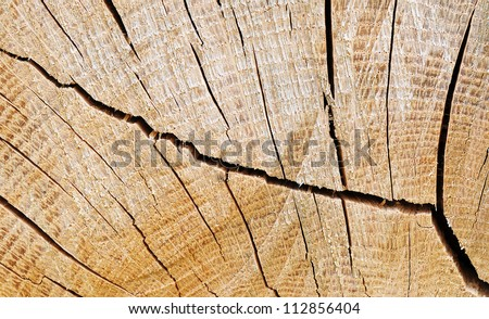 The abstract image - detail of cut wood