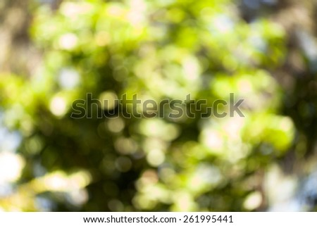 The Abstract Natural Bokeh,blurred bokeh. - stock photo