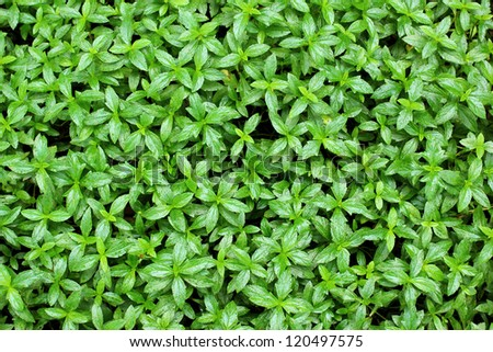 The abstract nature green plant background - stock photo