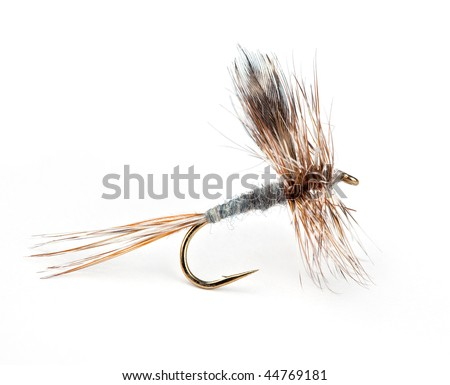 The Adams Dry, world's most popular dry fly for trout - stock photo
