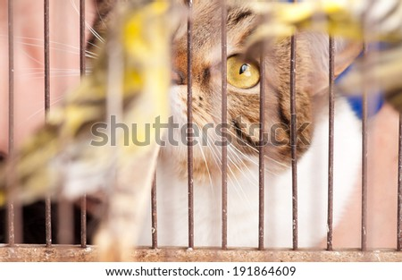 The adult tabby stared at a birdie through cage rods. Focus on the cat's eye