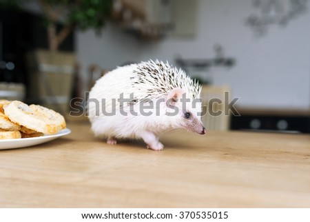 The African hedgehog runs on a table on which there is a plate with sweets. - stock photo